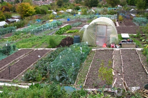 Allotments and poly tunnel