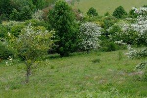 Benfield Hill