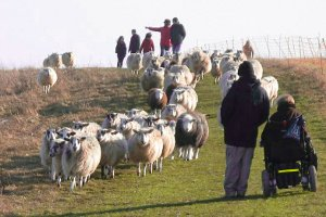 sheeponbeaconhillwithwalkers