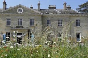 Stanmer House grass