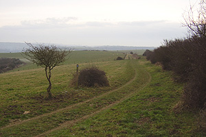 Brighton from East Hill