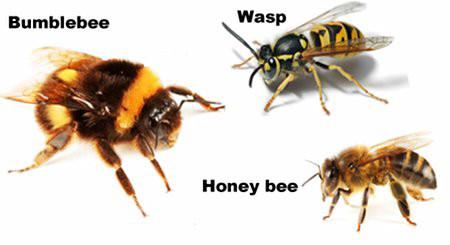 Bumblebee, honeybee and a wasp