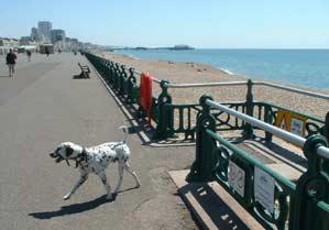 Dalmation on promenade