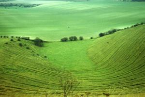 Green Downs fields