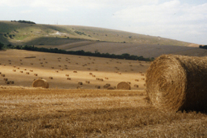 hay stacks on the Downs