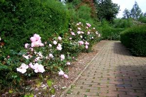 Dyke Road Park Rose Garden