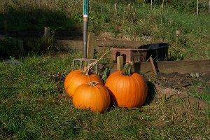 Foredown at Halloween