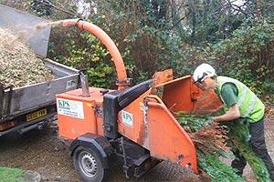 Christmas tree recycling | Brighton & Hove City Council