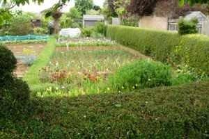 Allotment cultivation