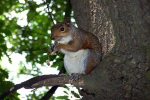 St. Ann's Well Gardens Squirrel