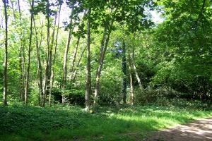 withdean woods