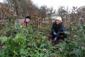 The Level, vol planting Dec 2013