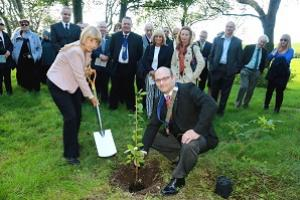 Planting an elm tree