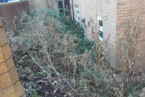 Penhurst place garden overgrown