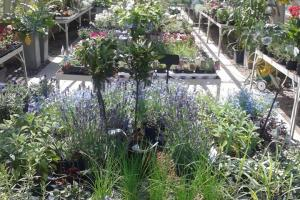 Stanmer nursery greenhouse flowers