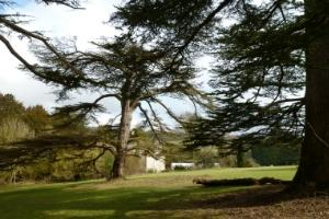Stanmer park grounds