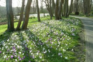 Woodvale bulbs