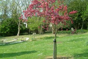 Woodvale tree