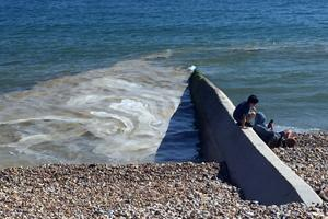 Algal bloom on the sea by Hove beach photo credit Abi McLoughlin