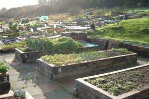 Mobility allotments at Foredown