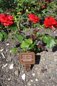 Woodvale rose plaques